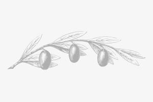 olivo-2